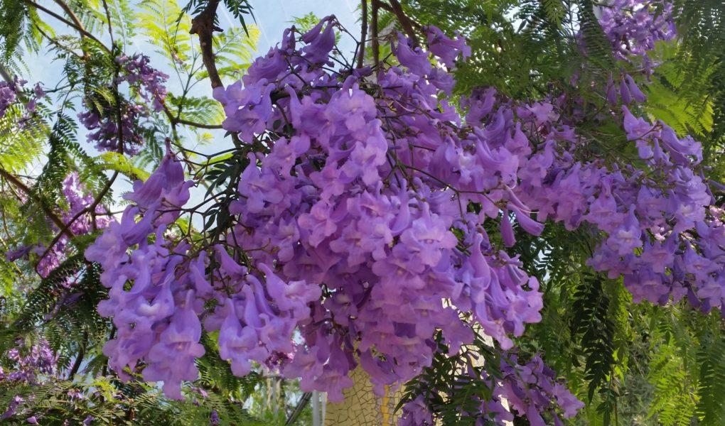 Purple flowers in the Eden Project.